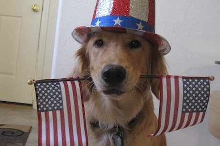 4th of July Golden Retriever Independence Day