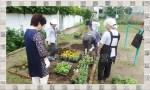 花壇植え替え7 花と緑