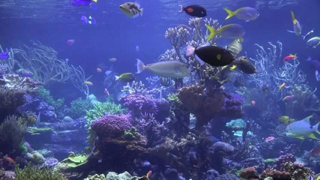 Aquarium 4k wallpaper aquarium fishes 2017 fish tank for Discount aquarium fish and reef