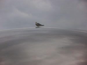 A bird on the Cloud Gate, or The Bean