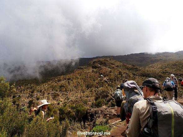 Moorland terrain in Mt. Kilimanjaro