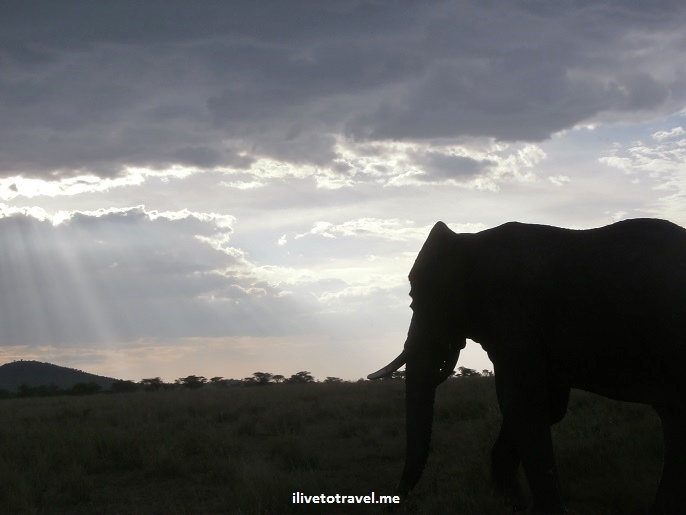 Elephant, sunset, skies, clouds, Africa, Serengeti, Tanzania, travel, safari, photo, Olympus