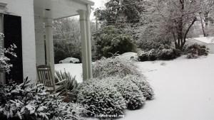 Atlanta, tree, snow, winter, photo, Samsung Galaxy