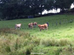 Camino de Santiago, Spain, trekking, hiking, path, Palas del Rei, wildlife, farm