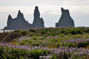 Vik, Iceland, village, flowers, scenic, landscape, photo, travel, Canon EOS Rebel