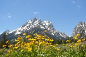 Grand Teton National Park, Wyoming, Grand Tetons, outdoor, nature, flowers, mountain, travel, hiking