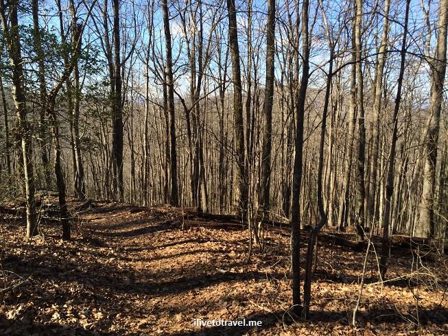 Jarrard Gap, Appalachian Trail, Georgia, photo, hiking, winter, outdoors