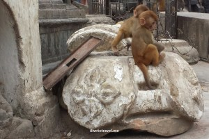 Baby monkeys - a fertile place!