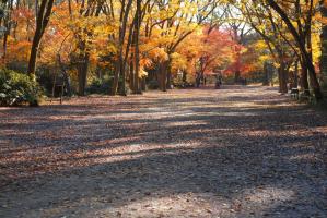 糺の森(下鴨神社)の画像