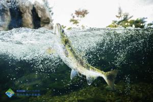 おんねゆ温泉 山の水族館の画像