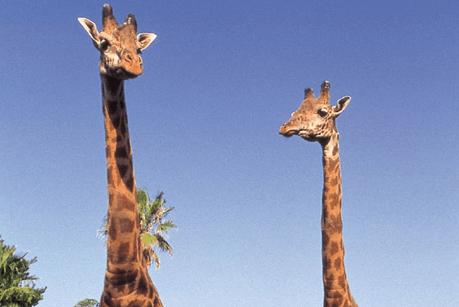 宮崎市フェニックス自然動物園(みやざきしフェニックスしぜんどうぶつえん)の画像