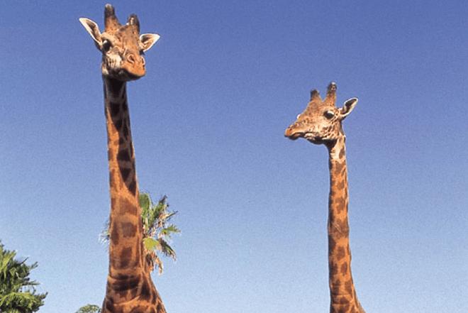 宮崎市フェニックス自然動物園(みやざきしフェニックスしぜんどうぶつえん)