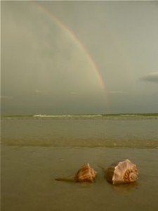 Whelks Under the Rainbow