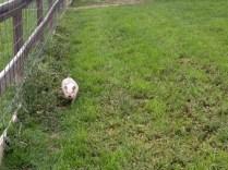 Me: Oink! Oink!