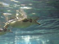 More penguins- My ode to Nevermind.