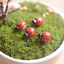 Small Crop Of Diy Mini Garden