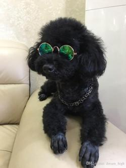 Mutable Glasses Ny Dogs Fashion Glasses Small Pet Dogs Cat Glasses Sunglasses Pet Glasses Pet Fashion Glasses Small Pet Dogs Cat Glasses Sunglasses Dogs Glasses Hanna Melin