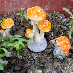 Old Mushroom Miniature Fairy Garden Terrarium Figurine Dollhouse Decor Mushroomminiature Fairy Garden Terrarium Figurine Dollhouse Decor 2018 Mushroom Miniature Fairy Garden Terrarium Figurine Dollhou