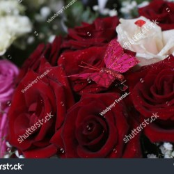 Bunch Roses Red White Pink Beautiful Stock Photo Royalty Free