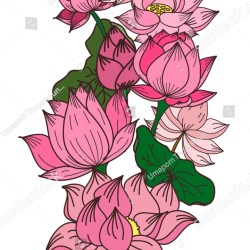 Free Hand Lotus Flower Vector Coloring Stock Photo