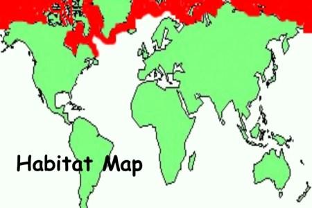 Map Of Were Polar Bears Live - Map of where polar bears live