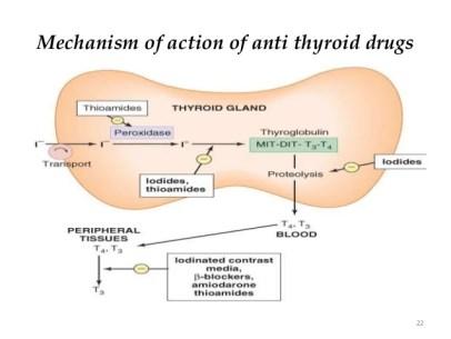 Antithyroid Drugs   InterActive Health