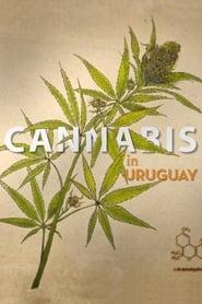 Cannabis in Uruguay Full online