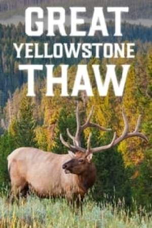 Great Yellowstone Thaw 2017 Online Subtitrat