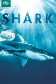Shark Full online
