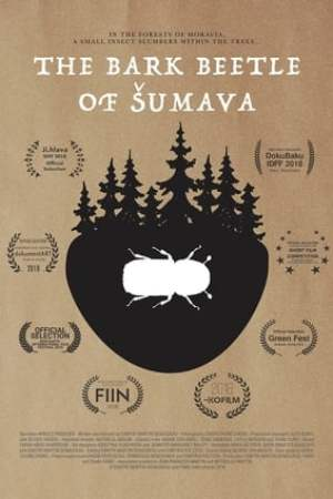 The Bark Beetle of Šumava