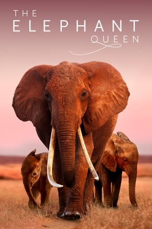 Image The Elephant Queen