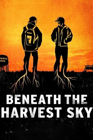 Image Beneath the Harvest Sky