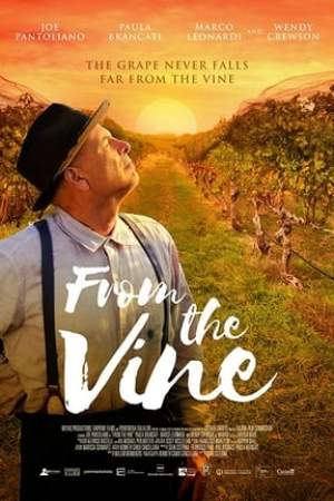 Image From The Vine