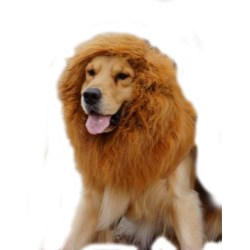 Small Crop Of Dog Lion Costume