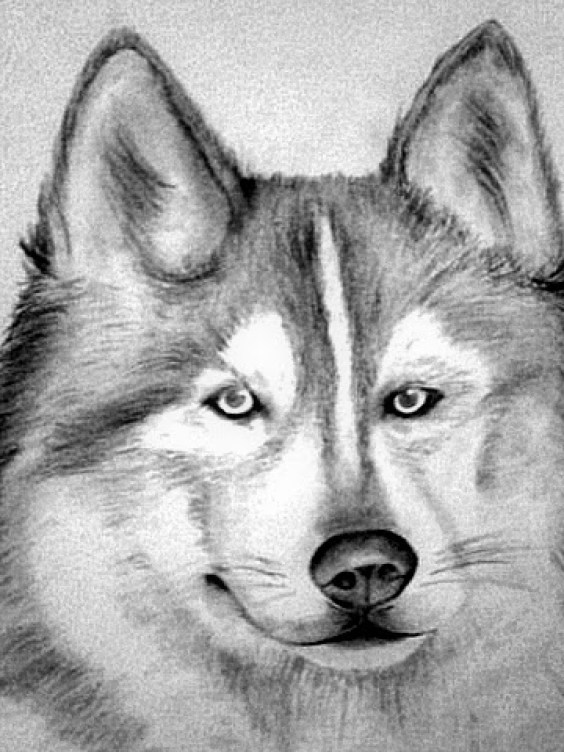10 Lindos Dibujos A Lapiz De Perros Imagenes De Perros