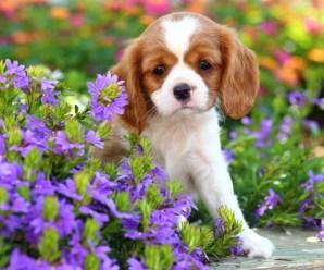 Fondos de pantalla imagenes de perros for Fondos de pantalla de perritos