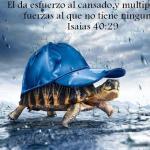 imagenes cristianas para cel (6)
