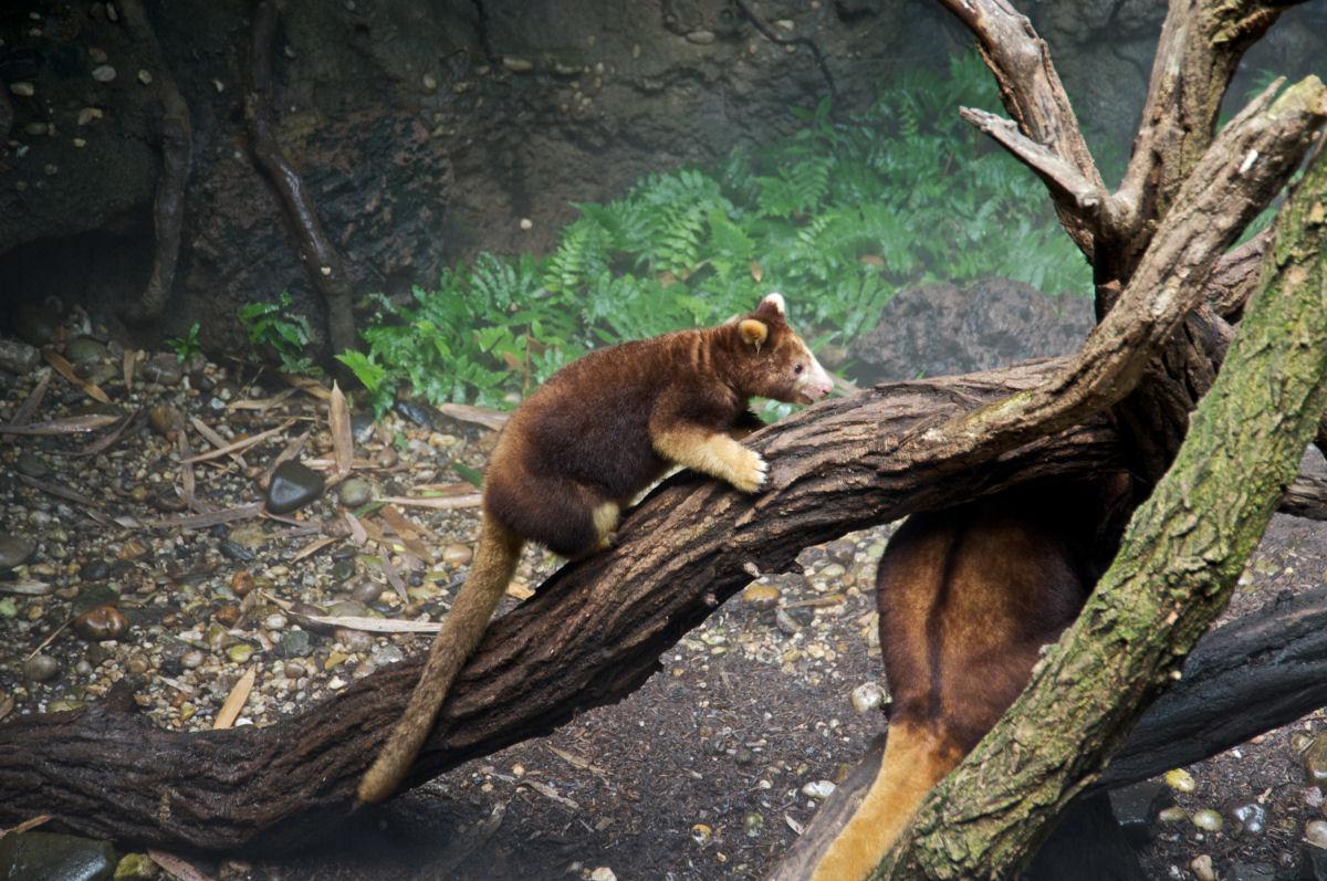 20 animais raríssimos que provavelmente sejam extintos antes que você morra