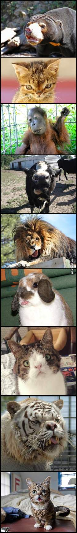 Small Of Animals With Down Syndrome