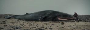 Un fotogramma tratto dal corto 'Whale Valley' (Danimarca -   Islanda)