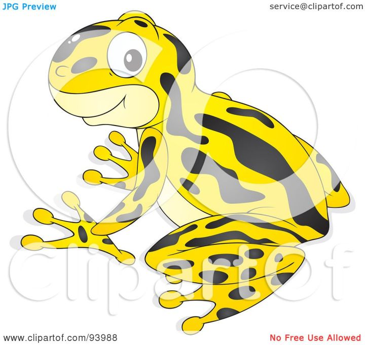 Poison dart frog clip art - photo#23