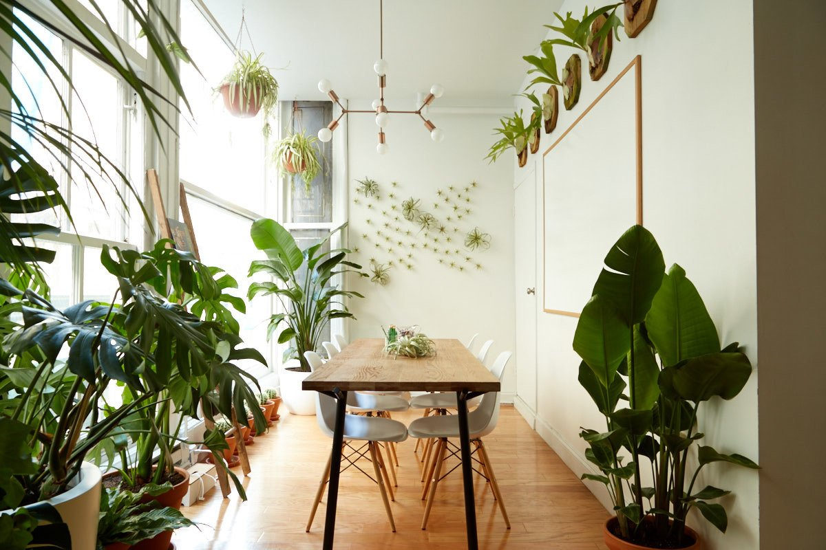 Catchy Sill Workspace New Brear Manhattan Snake Plant Home Depot Canada houzz-03 Snake Plant Home Depot
