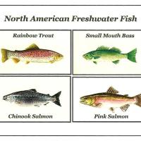 freshwater fish north america - Freshwater Gamefish of North America Poster ? Scott & Nix