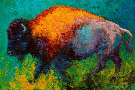 on the run bison marion rose