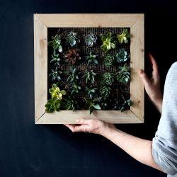 Inspiring Succulents Gif Still Julia Gartland 269 Diy Vertical Garden Diy Vertical Garden Wall 76d21798 610b 4fd6 B6ff Bd3faf09145b 2017 0306 Shop Succulents Diy Vertical Garden Frame