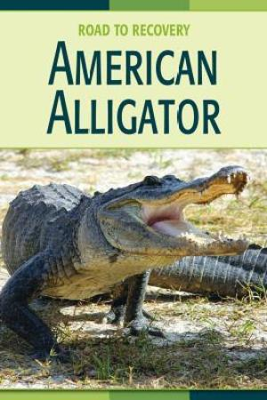 Reading books American Alligator