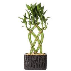 Small Crop Of Home Depot Gardening Center Plants
