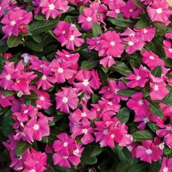Small Of Home Depot Gardening Center Plants