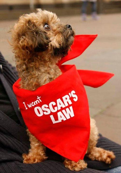 2011-11-13-Oscarinhisbandanna.jpg