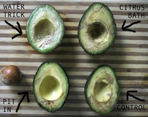 First Preventing Avocados From How Long Do Avocados Last After Being Picked How Long Do Avocados Last After Cut We Tried Methods